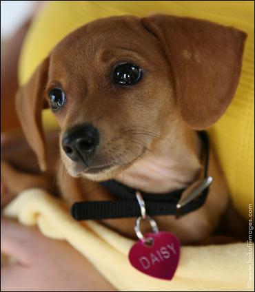 Canine-Baby-Daisy