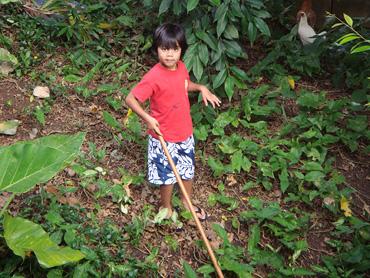 Mokulele-and-stick